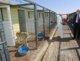 Hayvan Kasabası Düzenli Olarak Dezenfekte Ediliyor
