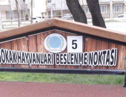 Nevşehir Belediyesi'nden Sokak Hayvanlarına Mama ve Su Desteği