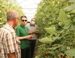 Sarıhıdır'da Sera Projesi Sürüyor