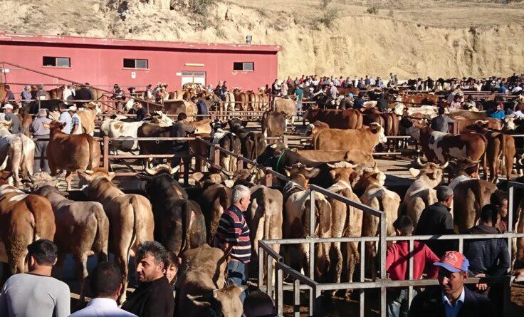 Nevşehir Hayvan Pazarı Açılıyor